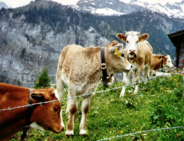 Food for thought – An integral plan for Swiss food security