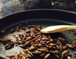 Insects and bugs approved as a delicious and nutritious food in Finland and Switzerland
