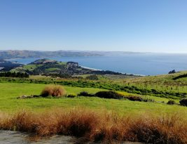 Dunedin is a really nice city surrounded by lots of quiet beautiful beaches and villages