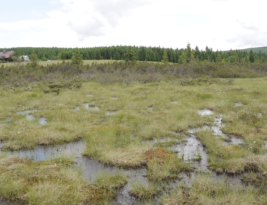 Widespread Drying of Europe's peatland