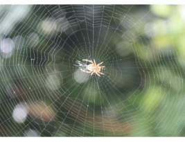 Wood Fibre & Spider Silk Could Rival Plastic