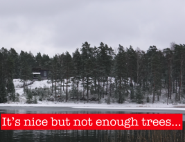 Finland's Carbon Emissions Overshadow Our Forests