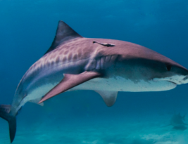 Loan Sharks, Debt Collectors & Public Subsidies