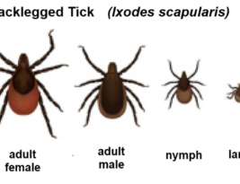 Ticks and public healthcare…